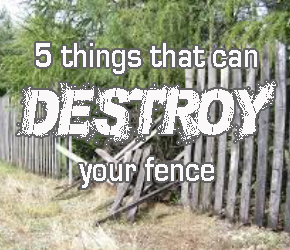 Watch out for these top fence killers